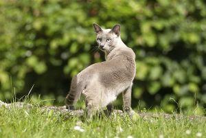 Katzen-Mai09-011.jpg