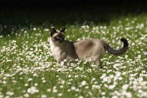 Katzen-Mai09-024.jpg