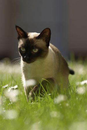 Katzen-Mai09-040.jpg