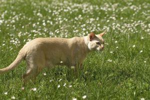 Katzen-Mai09-057.jpg
