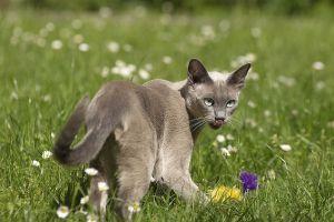 Katzen-Mai09-066.jpg