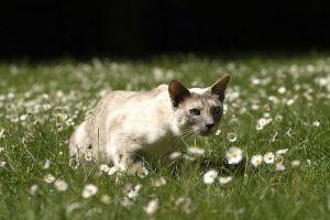 Katzen-Mai09-108.jpg