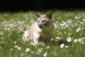 Katzen-Mai09-110.jpg