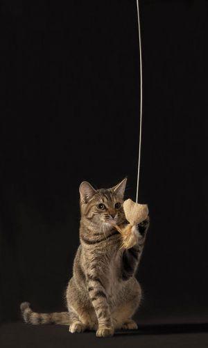 Katze-Nelly032.jpg