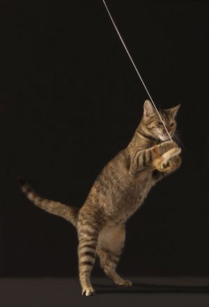 Katze-Nelly037.jpg
