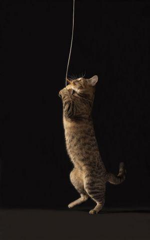 Katze-Nelly042.jpg