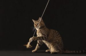 Katze-Nelly043.jpg