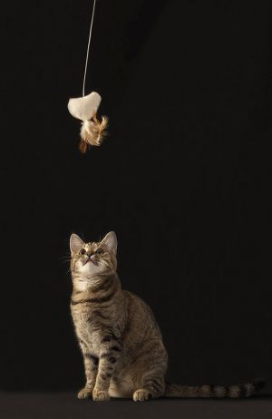 Katze-Nelly044.jpg