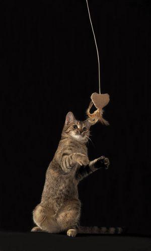 Katze-Nelly047.jpg