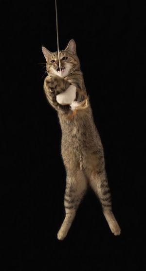 Katze-Nelly049.jpg