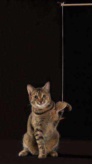 Katze-Nelly050.jpg