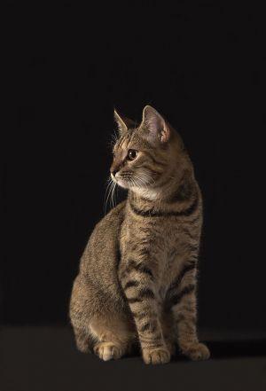 Katze-Nelly058.jpg