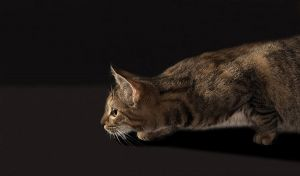 Katze-Nelly060.jpg