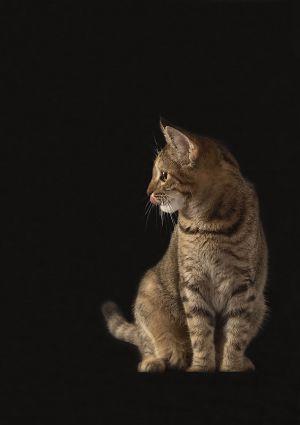Katze-Nelly096.jpg