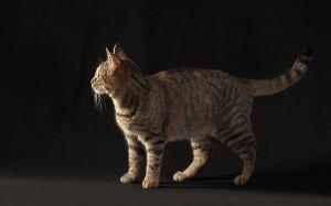 Katze-Nelly127.jpg