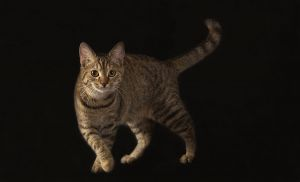 Katze-Nelly128.jpg