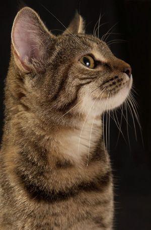 Katze-Nelly172.jpg