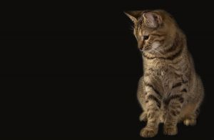 Katze-Nelly183.jpg