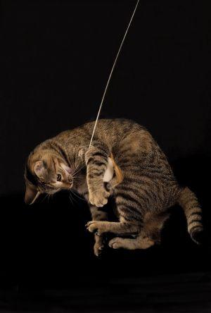 Katze-Nelly2-005.jpg