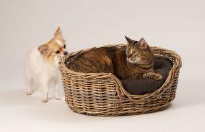 Hunde_080510-KatzeNelly-031.jpg