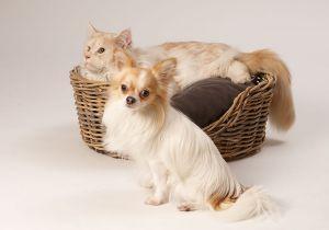 Hunde_080510-KatzeSammy-147.jpg