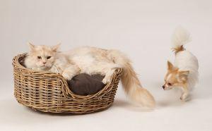 Hunde_080510-KatzeSammy-168.jpg