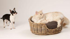 Hunde_080510-KatzeSammy-300.jpg
