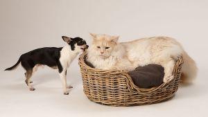 Hunde_080510-KatzeSammy-302.jpg