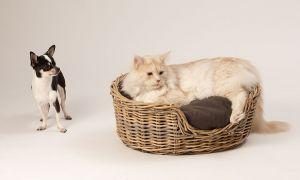 Hunde_080510-KatzeSammy-312.jpg