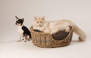 Hunde_080510-KatzeSammy-323.jpg