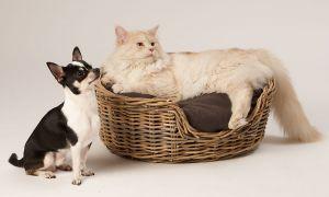 Hunde_080510-KatzeSammy-340.jpg