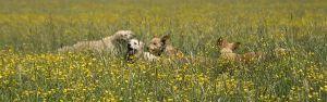 Alf-Russenwiese-005.jpg