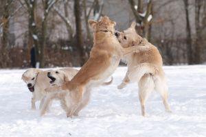Schnee-mit-Barney,Bonnie,-G.jpg